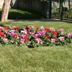 Diseño de jardines mallorca