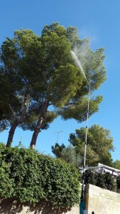jardineros-mallorca-15
