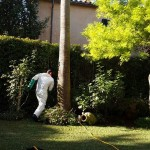 jardineros-mallorca-22