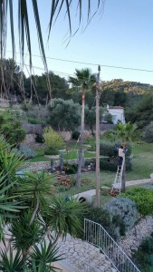 jardineros-mallorca-31