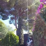 jardineros-mallorca-43