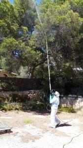 jardineros-mallorca-49