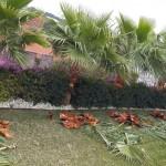 jardineros-mallorca-57
