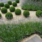 mantenimiento-de-jardines-mallorca-1