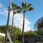 mantenimiento-jardines-11