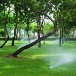 mantenimiento-jardines-36