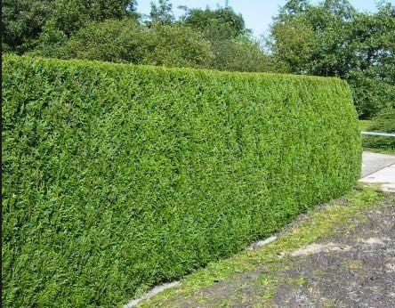 Mantenimiento de jardines en mallorca podas y jardines for Mantenimiento jardines