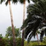 poda de palmeras en mallorca