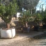 jardineros-en-mallorca-17