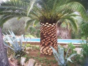 jardineros-en-mallorca-20 - copia