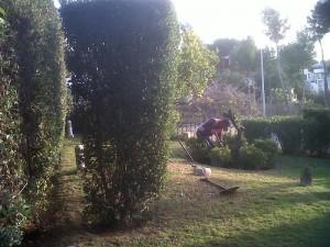 jardineros-en-mallorca-22