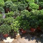 jardineros-en-mallorca-3