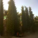 jardineros-en-mallorca-33