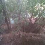 jardineros-en-mallorca-39