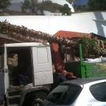 jardineros-en-mallorca-45