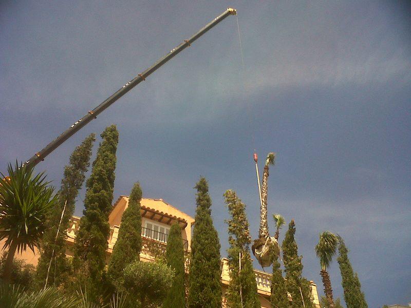 Construcci n de jardines en mallorca podas y jardines for Jardines mallorca
