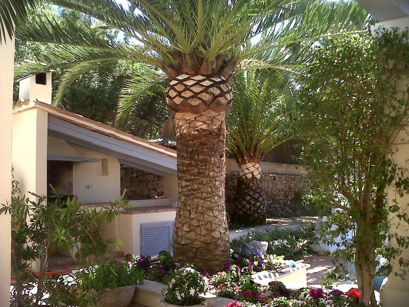 Tala y poda de palmeras mallorca podas y jardines mallorca for Jardines mallorca