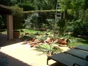 jardineros-en-mallorca-1009