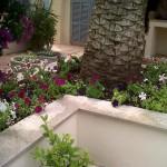 jardineros-en-mallorca-71