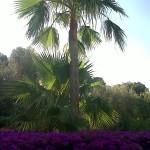 jardineros-en-mallorca-72