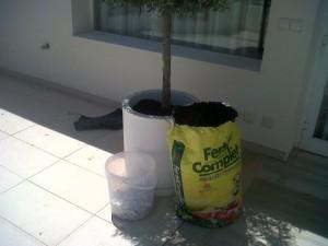 jardineros-en-mallorca-75