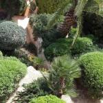 jardineros-en-mallorca-80