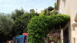 jardineros-en-mallorca-81