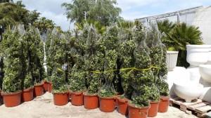 jardineros-en-mallorca-85