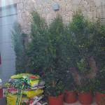 jardineros-en-mallorca-1