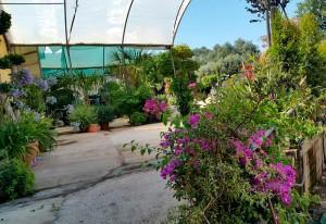 jardineros-en-mallorca-2