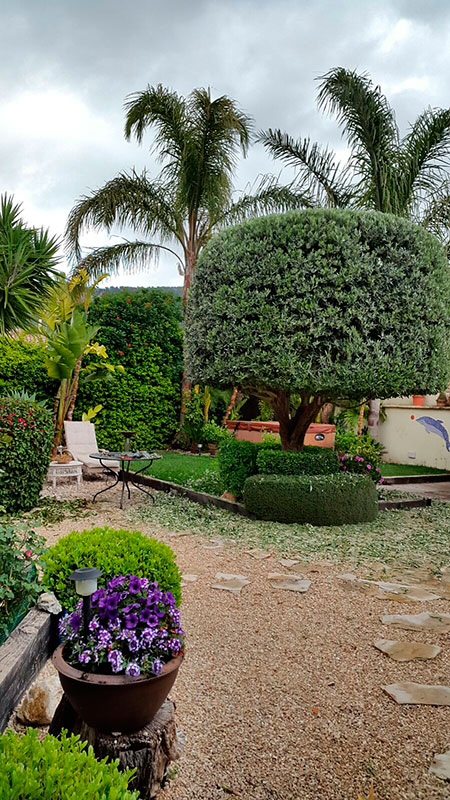 Mantenimiento de jardines en mallorca podas y jardines for Mantenimiento de jardines
