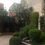 empresas-jardineria-mallorca-12