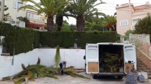empresas-jardineria-mallorca-21