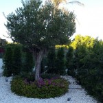empresas-jardineria-mallorca-28