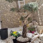 empresas-jardineria-mallorca-31