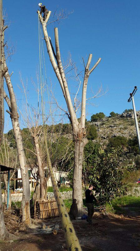 Poda de pinos en altura mallorca podas y jardines mallorca for Jardines mallorca