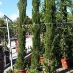 jardineros-mallorca-13