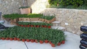 jardineros-mallorca-20