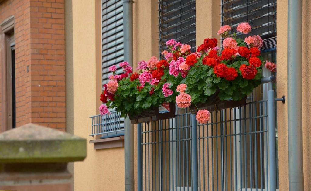 mantenimiento de jardines en mallorca