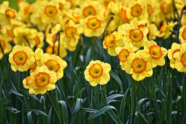Narciso - jardineros mallorca