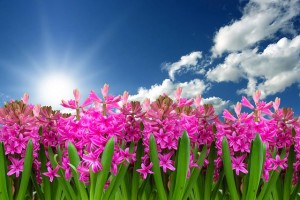 jacinto- jardineros mallorca