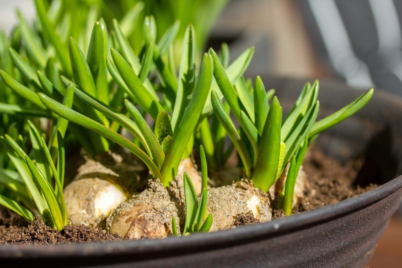 plants-1272859_1280
