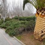 empresas de jardineria en mallorca