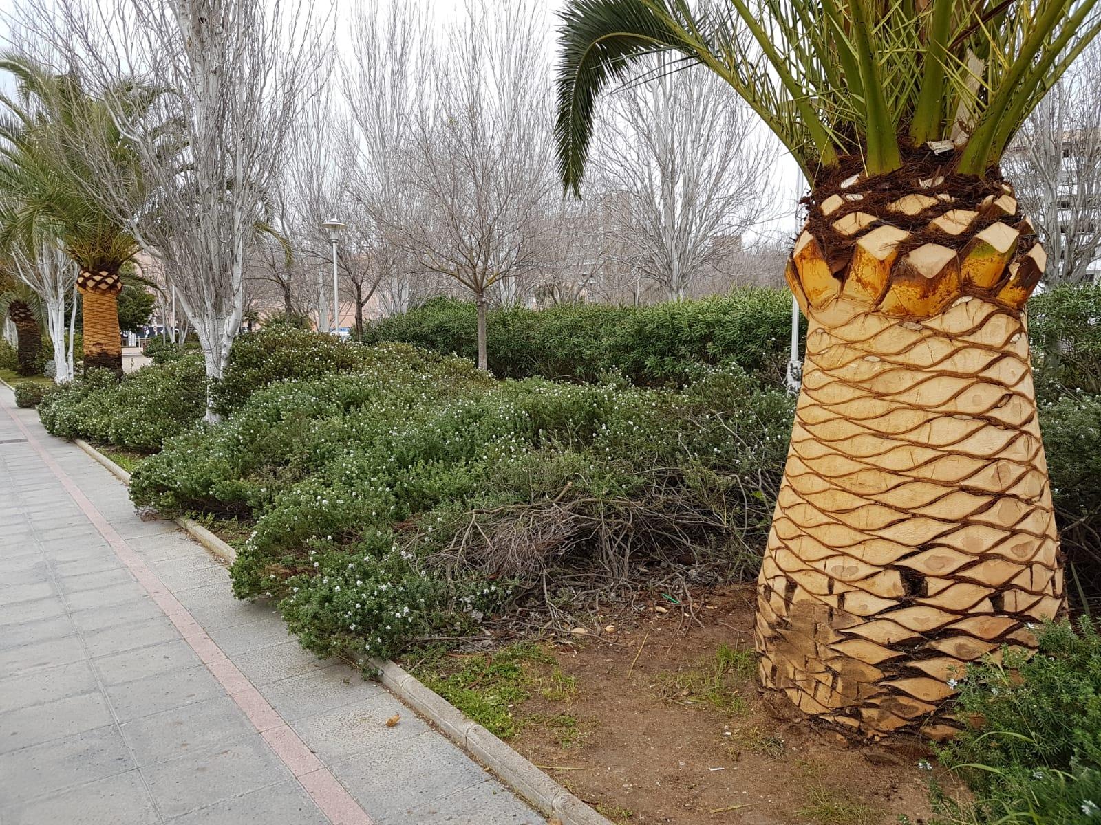 empresas-jardineria-mallorca-11