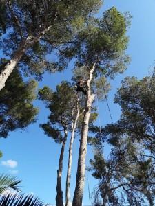 Empresas de jardinería en Mallorca