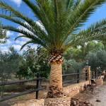 limpieza de Palmerasa Mallorca